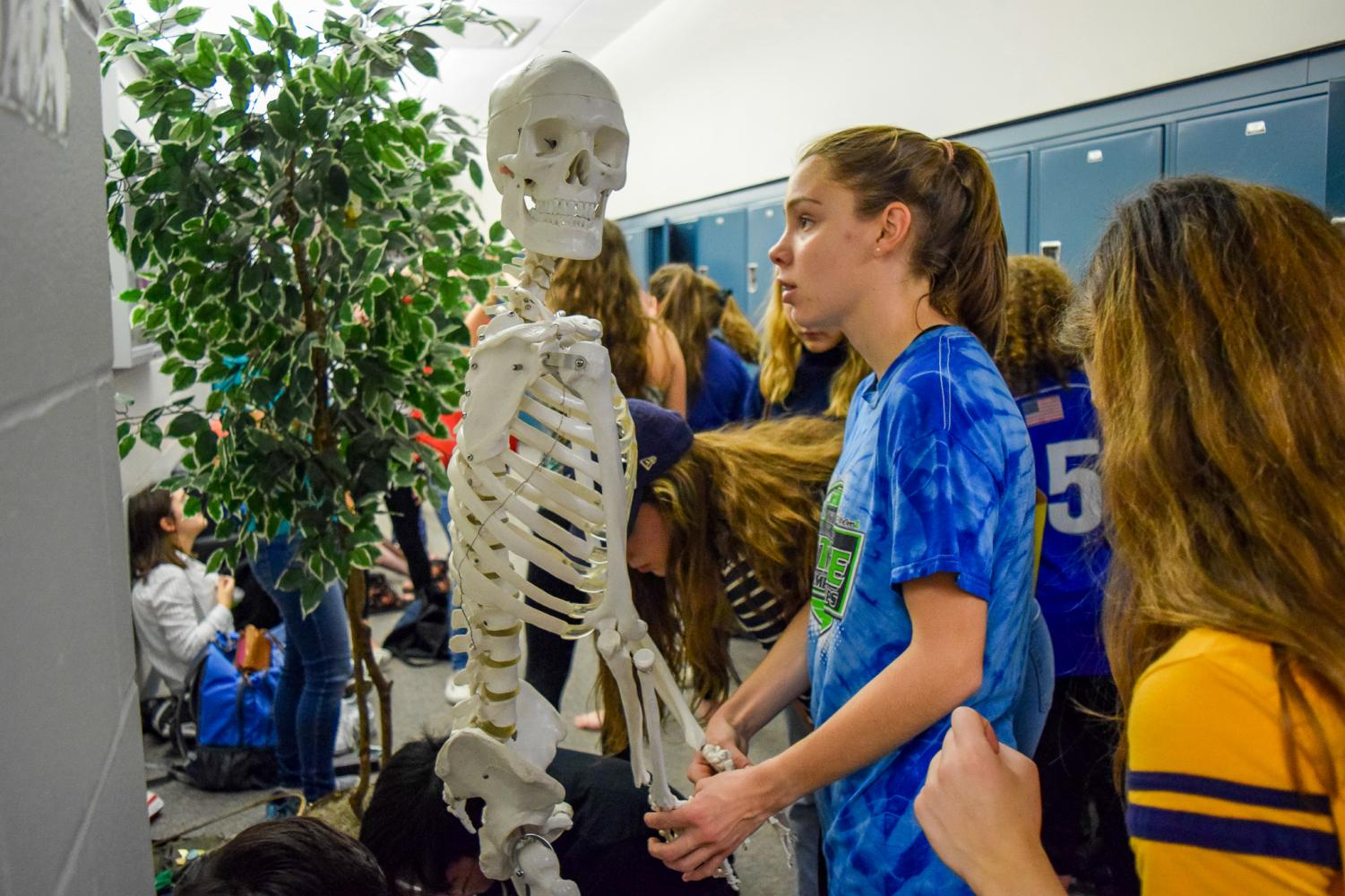 The+SGA+assigned+items+with+either+one%2C+three%2C+five+or+40+points.+Senior+and+Class+of+2019+council+member+Erica+Sammarco+of+Colts+Neck+looks+at+the+biology+skeleton%2C+a+five+point+item+in+the+scavenger+hunt.